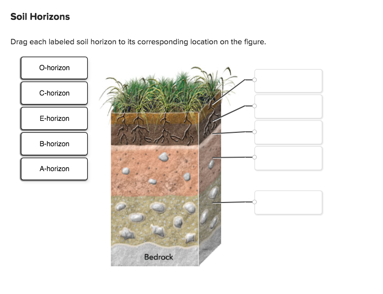 Solved drag each labeled soil horizon to its correspondin for Soil 4 climate
