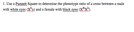 Use a Punnett Square to determine the phenotype ra