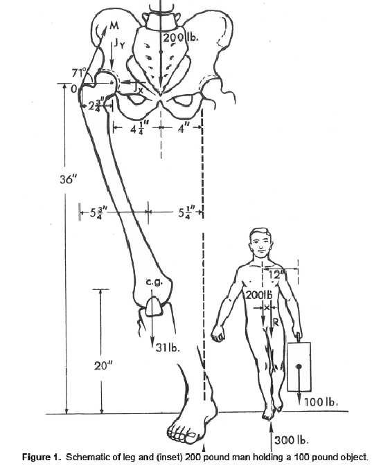 Figure 1. Schematic of leg and (inset) 200 pound