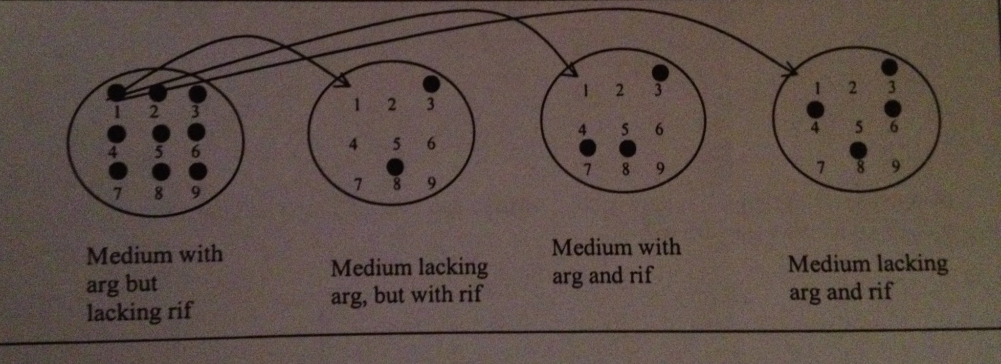 A microbiologist performed a conjunction between a
