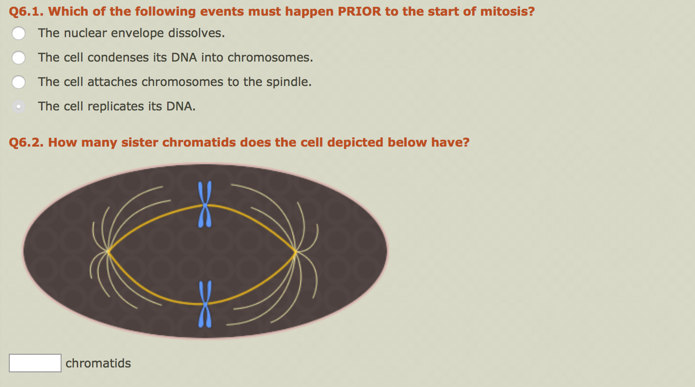 Solved: Which Of The Following Events Must Happen PRIOR To ...