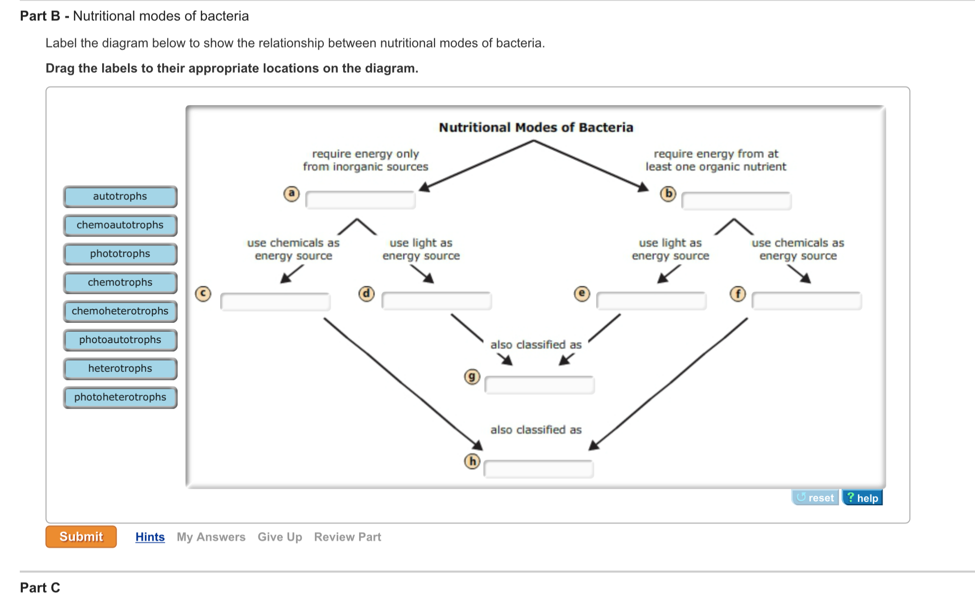show the relationship between nutritional modes of bacteria