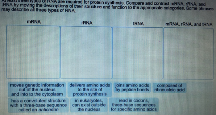 Solved at least three types of rna are required far prote Types of contrast