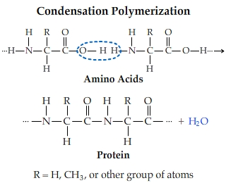 polymerization reactions Also, the polymerization reactions for nylon 6 and spandex do not proceed by elimination of water or other small molecules nevertheless, the polymer clearly forms by a step-growth process some condensation polymers.