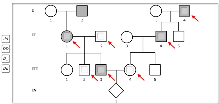 Pedigree 2 from Part A is shown below. Recall that