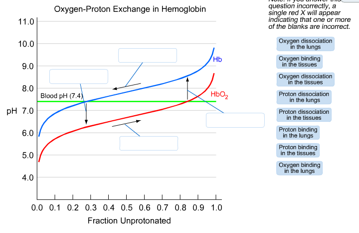 Oxygen-Proton Exchange in Hemoglobin question inco