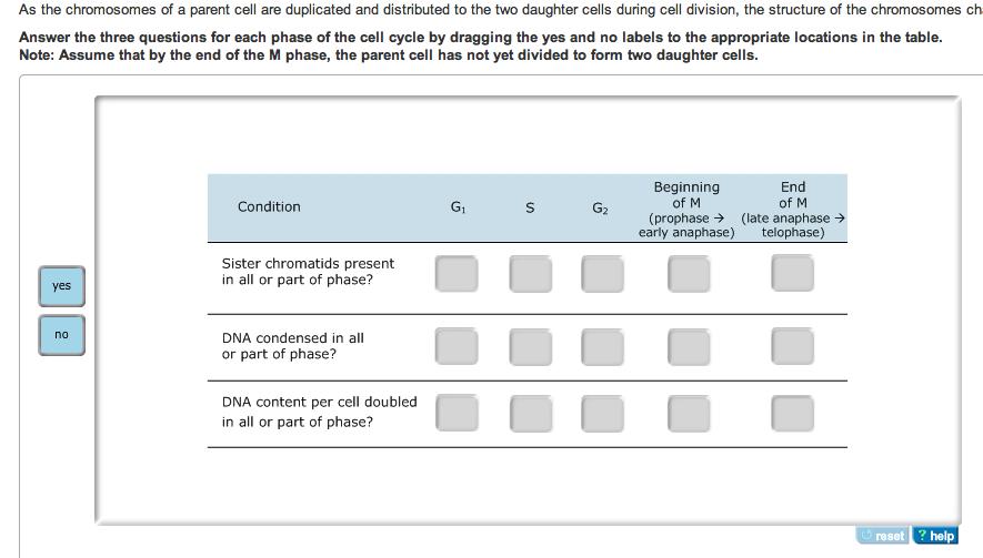 As The Chromosomes Of A Parent Of A Parent Cell Ar... | Chegg.com