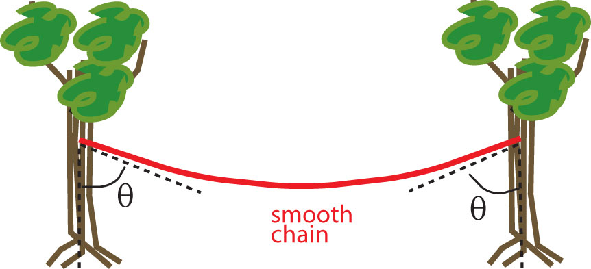 (a) The figure shows a chain hanging from two tree