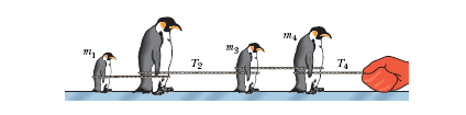 The figure shows four penguins that are being play