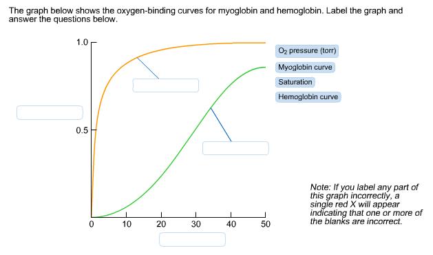 hemoglobin and oxygen relationship questions