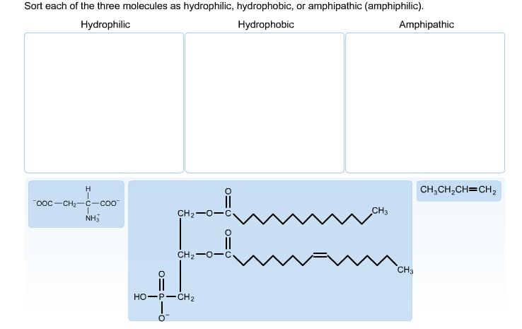 Sort each of the three molecules as hydrophilic, h
