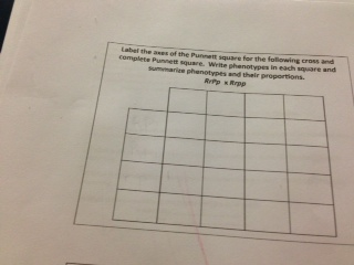 Label the areas of the Punnett square for the foll