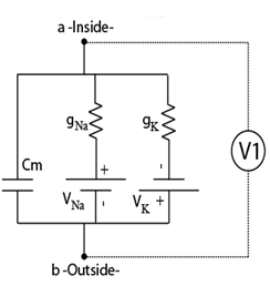 If gK>> gNa (meaning the conductance for K i
