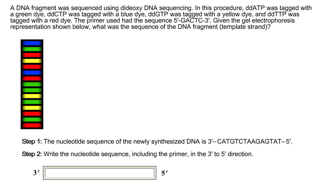 what is a template in dna - solved dna fragment was sequenced using dideoxy dna seque