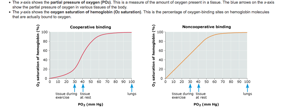 experiment 10 comparison of biological oxygen Top 10 experiments on respiration | plants in this case more amount of co 2 is released in comparison to the absorbed oxygen as 10 experiment to compare.