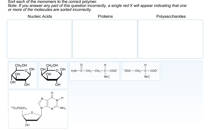 Sort each of the monomers to the correct polymer.