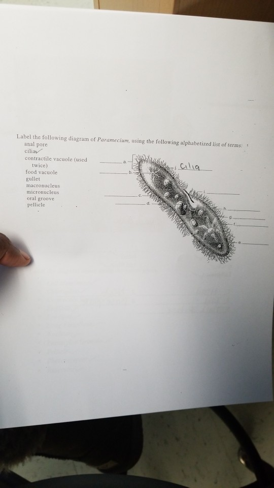label the following diagram of paramecium, using the following alphabetized  list of terms anal pore