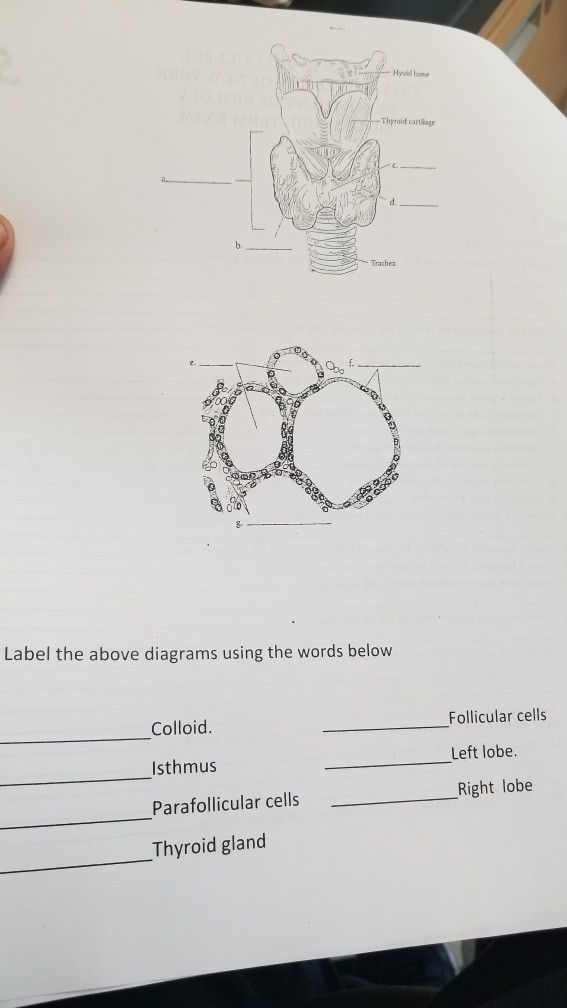 Solved Label The Above Diagrams Using The Words Below
