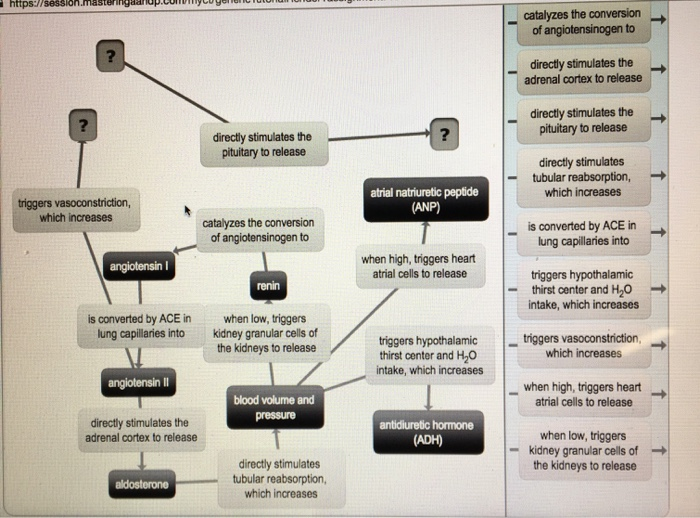 Concept Map Renin Angiotensin Aldosterone Mechanism.Solved Renin Angiotensin Aldosterone Mechanism I M Suppos