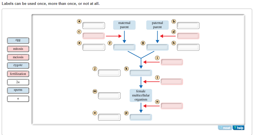 What Form Of Reproduction Is Shown In This Figure Unity Companies ...