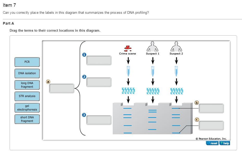 Scene Diagram Help Diy Enthusiasts Wiring Diagrams