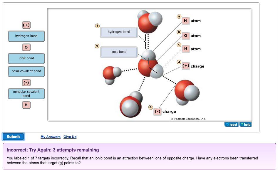 labeled diagram of hydrogen bonding biology archive | february 26, 2017 | chegg.com #1