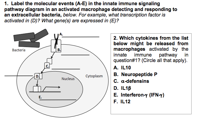 Solved label the molecular events in the innate immune si expert answer ccuart Image collections