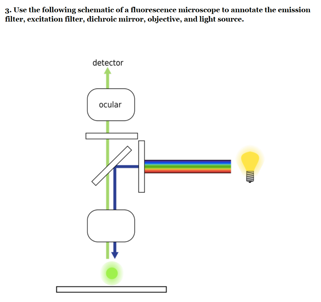 Solved 3 use the following schematic of a fluorescence m use the following schematic of a fluorescence microscope to annotate the emission filter ccuart Image collections