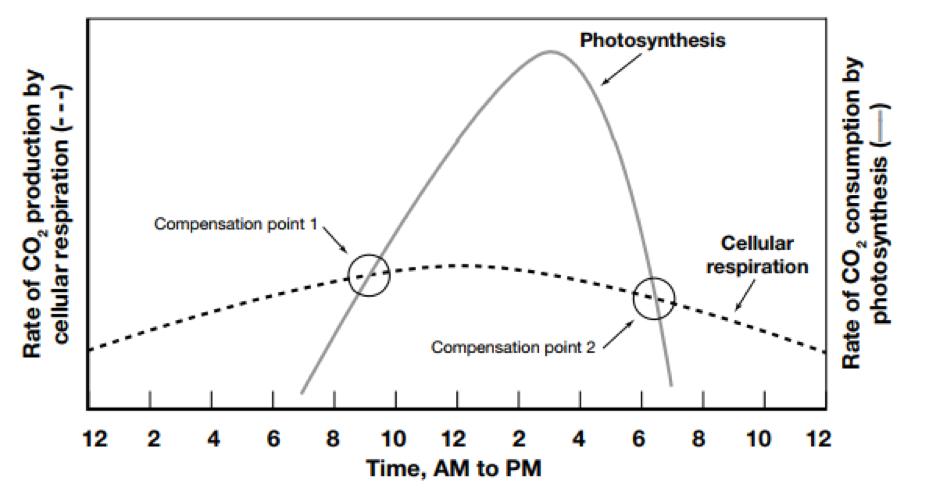 Photosynthesis Vs Cellular Respiration Chart Bobi