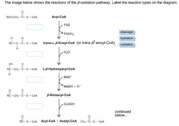 cm wiring diagram hoist b 27294 diagram of b oxidation