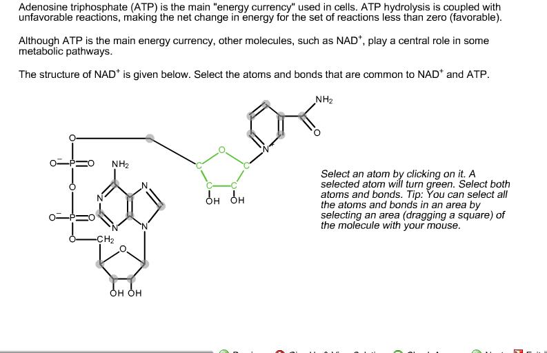Atp Diagram Of Atom Auto Wiring Diagram Today