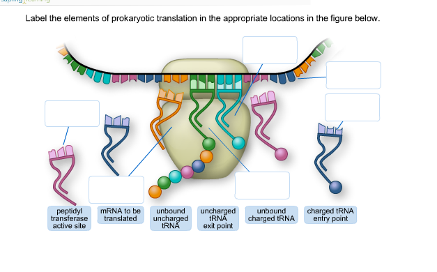Prokaryotic Translation Diagram Wiring Diagram Database