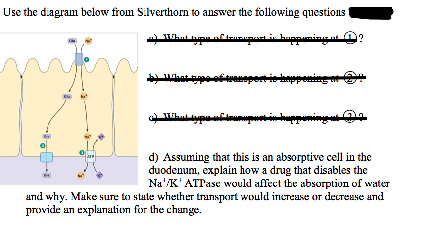 Solved Use The Diagram Below From Silverthorn To Answer T