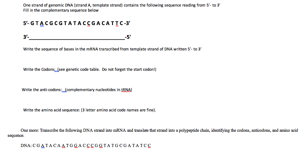 Solved one strand of genomic dna strand a template stra one strand of genomic dna strand a template strand contains the following sequence maxwellsz