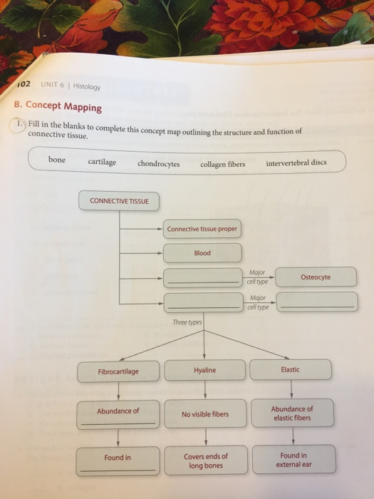Blood Functions To Concept Map Answers