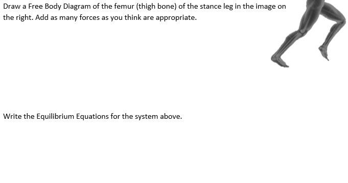 Solved Draw A Free Body Diagram Of The Femur Thigh Bone