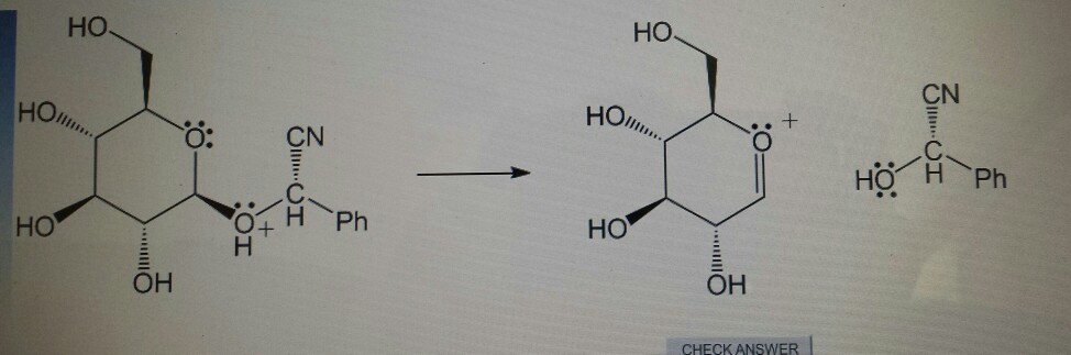 term paper on glycosides