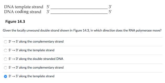 Solved: DNA Template Strand 5\'_____3\' DNA Coding Strand 3 ...