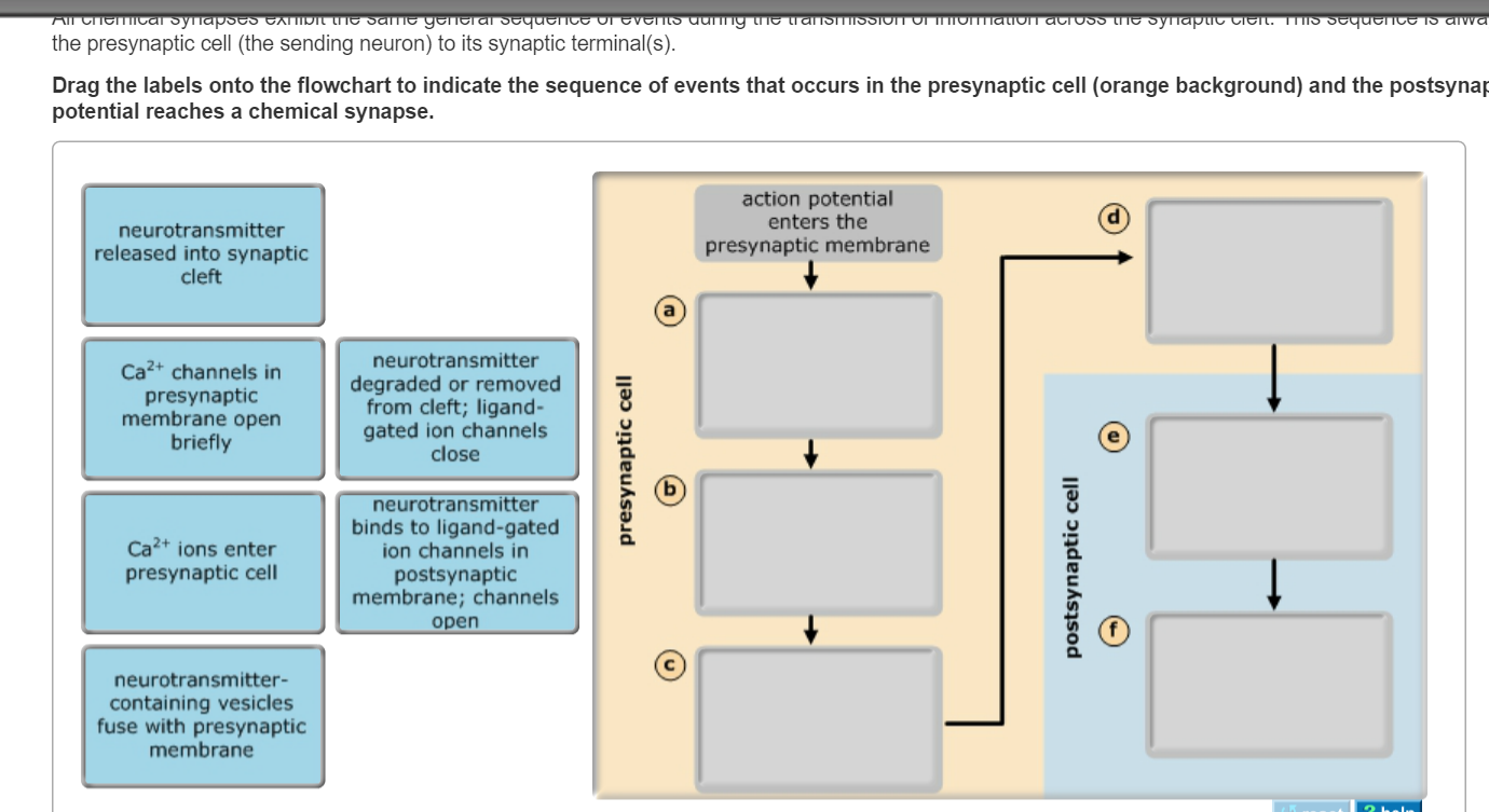 action potential and correct answer Multiple choice questions answer the following all of the ca 2+ required for contraction enters a myocyte during the plateau phase of the action potential.
