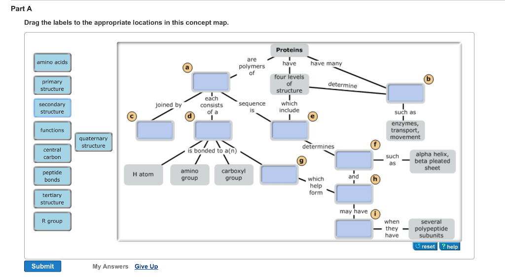 Proteins Concept Map.Solved Drag The Labels To The Appropriate Locations In Th