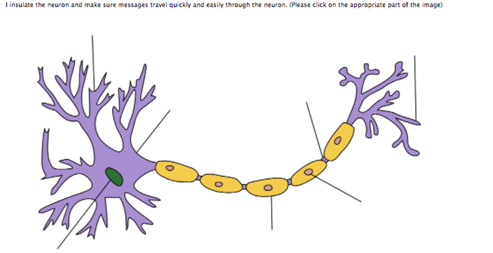 Solved The Nerve Impulse Is Called An Action Potential T