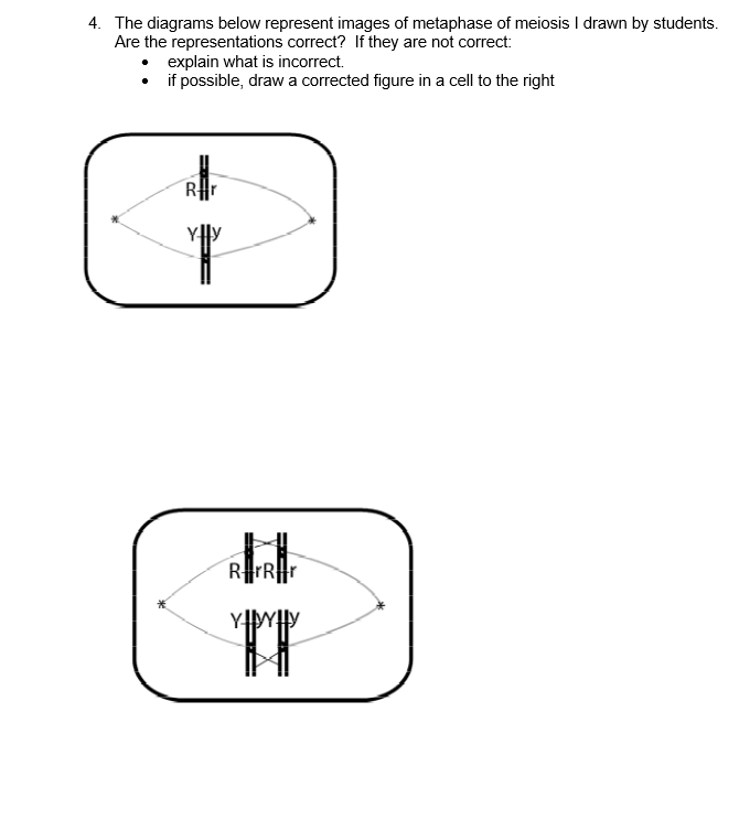 Solved the diagrams below represent images of metaphase o question the diagrams below represent images of metaphase of meiosis i drawn by students are the represen ccuart Images
