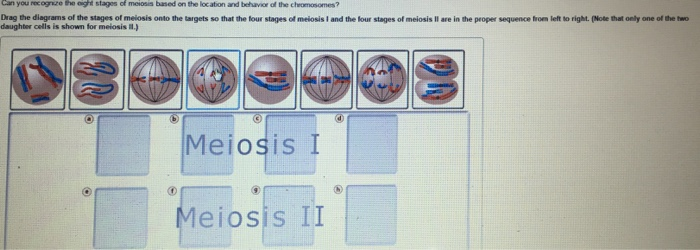 Solved Can You Roc Drag The Diagrams Of The Stages Of Mei Chegg Com