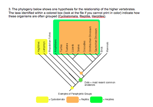 3 The Phylogeny Below Shows One Hypothesis For Relationship Of Higher Vertebrates