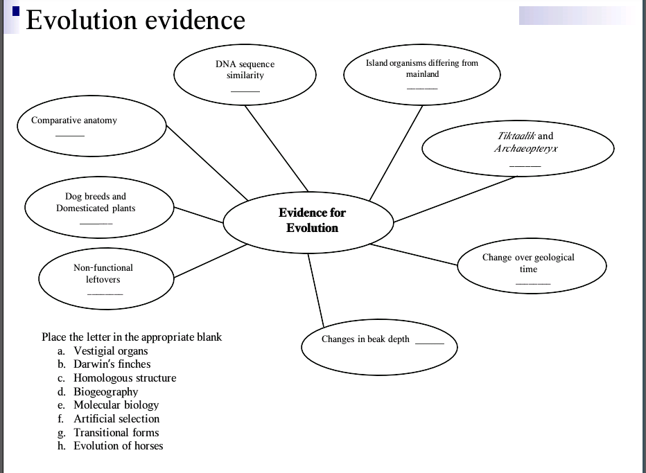 Solved Evolution Evidence Place The Letter In The Appropr