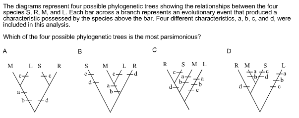 Solved The Diagrams Represent Four Possible Phylogenetic