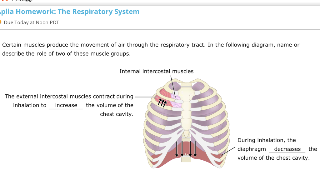 Solved Certain Muscles Produce The Movement Of Air Throug