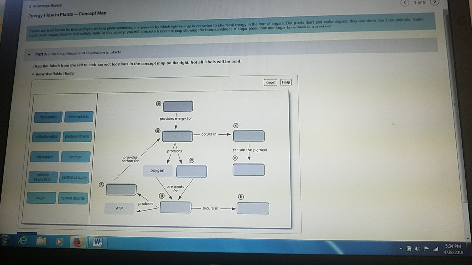Solved: 1019 (2) Energy Flow In Plants  Concept Map Minods