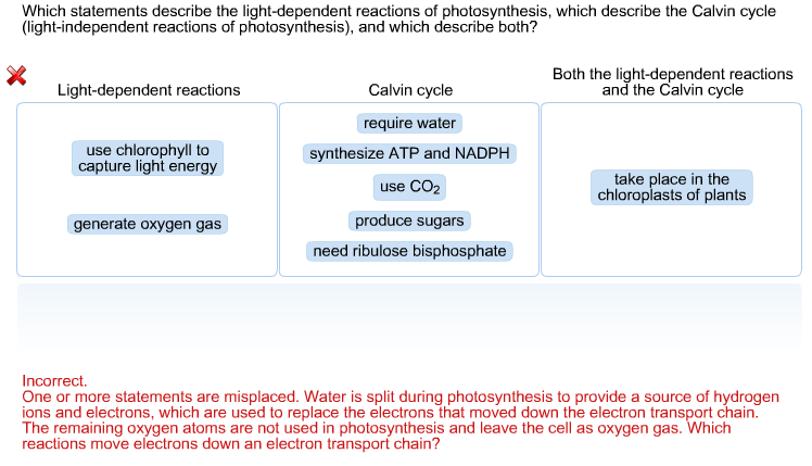 Solved which statements describe the light dependent reac which statements describe the light dependent reactions of photosynthesis which describe the calvin cycle publicscrutiny Gallery