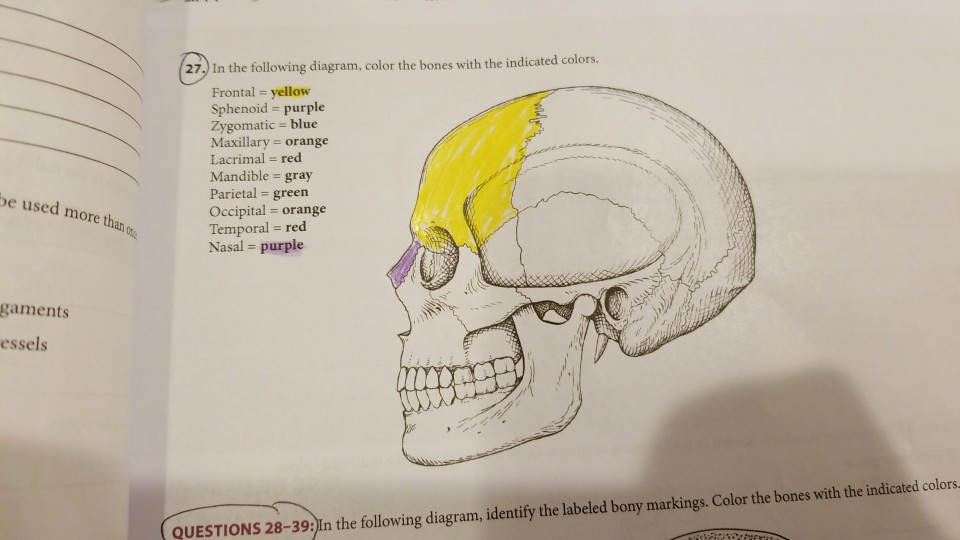 Solved 27 in the following diagram color the bones with 27 in the following diagram color the bones with the indicated colors frontal ccuart Images